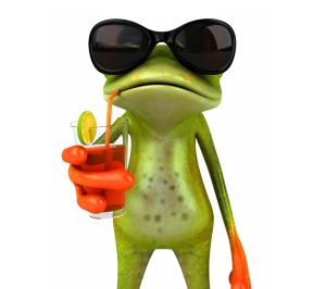 funny_frog-1480175